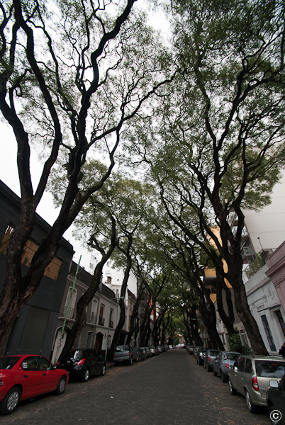 Photo of tree-lined streets