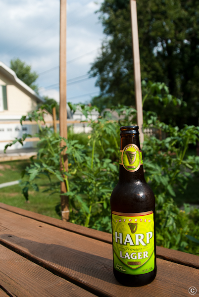 Photo of Harp beer