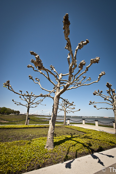 Charleston in Photos (Part 2)